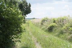 Ingrown грунтовая дорога в Баварии Стоковое Фото