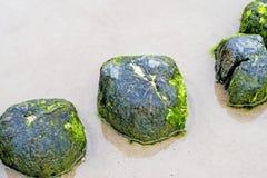 Inguine nel Mar Baltico Fotografie Stock Libere da Diritti