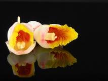 Ingwer-Blumen Stockbilder