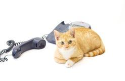 Ingwer-Kätzchen, das nahe einem Telefon liegt Lizenzfreie Stockfotos