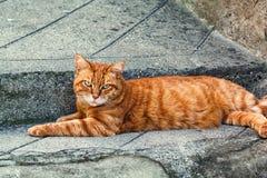 Ingwer streifte die Katze, die auf einer Pflasterung in Entrevaux, Frankreich sitzt Lizenzfreie Stockfotografie