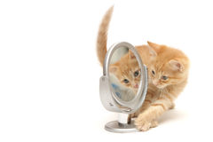 Ingwerkätzchen, das den Spiegel untersucht stockfoto