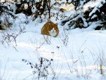 Ingwerkatze, die in einem schneebedeckten Wald sitzt Stockbild