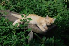 Ingwerkatze hat ein Sonnenbad auf der alten Bank, die mit Gras und Anlagen umgeben wird stockfoto