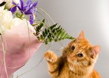 Ingwerkatze riecht einen Blumenstrauß von Blumen Lizenzfreies Stockbild