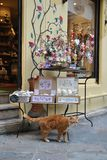Ingwerkatze vor Shopfenster Stockfotografie