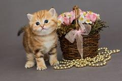 Ingwerkätzchen und Korb von Blumen Stockfoto