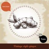 Ingwerwurzelillustration Retro- Hintergrund der Weinlese mit Hand gezeichneter Skizzeningwerwurzel Lizenzfreie Stockfotos
