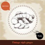 Ingwerwurzelillustration Retro- Hintergrund der Weinlese mit Hand gezeichneter Skizzeningwerwurzel Lizenzfreies Stockfoto