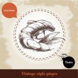 Ingwerwurzelillustration Retro- Hintergrund der Weinlese mit Hand gezeichneter Skizzeningwerwurzel Stockfotografie
