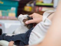 Inhaber, der seine Katze streichelt Stockfotografie