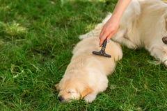 Inhaber, der um ihrem Haustier sich kümmert stockbild