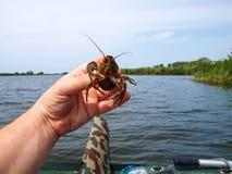 Inhabitant of freshwater crayfish Stock Photography
