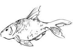 Inhabitant of reservoirs of earth of large fish. Sketch of inhabitant of reservoirs of earth of large fish Royalty Free Stock Photography