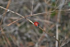 Inhabitants of the forest: ladybug Stock Photos