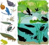 Inhabitants of pond Stock Image