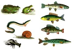 The inhabitants of the rivers. Stock Photography