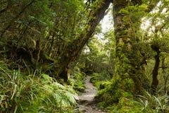 Inheems beukbos, Nieuw Zeeland Royalty-vrije Stock Afbeelding