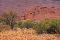 Inheemse Bomen, Kata Tjuta stock foto's