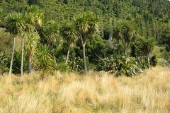 Inheemse struik in Nieuw Zeeland Stock Afbeelding