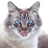Inhemsk katt. arkivfoton