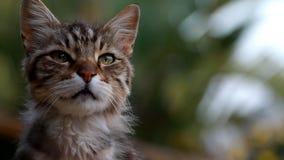 Inhemsk katt arkivfilmer