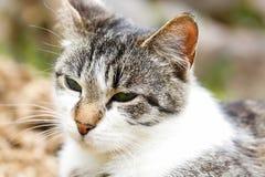 Inhemsk katt i naturen som tycker om frihet, på en utkik Fotografering för Bildbyråer
