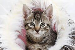 Inhemsk katt, kattunge i korg Royaltyfria Bilder
