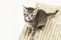Inhemsk katt, kattungesammanträde på matta Royaltyfria Foton