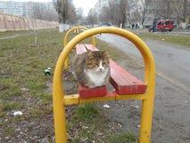Inhemsk katt på röd-guling en träbänk Royaltyfria Bilder