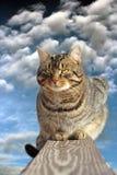 Inhemsk katt på staketet Royaltyfri Fotografi