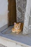 Inhemsk katt på stol. Arkivbilder