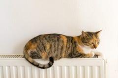 Inhemsk katt som kopplar av på ett element arkivbilder
