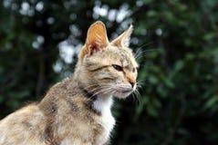 Inhemsk katt som någonstans ser royaltyfria bilder