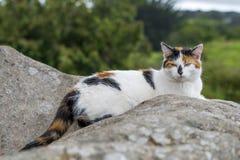 Inhemsk katt som vilar på en vagga Royaltyfri Foto