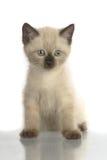 inhemsk kattunge Royaltyfri Fotografi