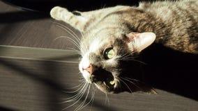 Inhemsk kvinnlig katt som hemma ligger i solig dag arkivfoto