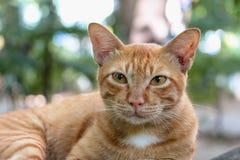 Inhemsk orange katt utomhus Fotografering för Bildbyråer