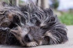 Inhemsk svart hund Arkivfoton
