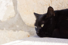 Inhemsk svart katt Royaltyfri Foto