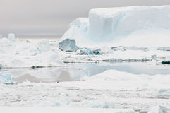 Inhospitable Antarctica. A sole penguin standing on an ice-floe in the apparently inhospitable landscape of icebergs in Antarctica Royalty Free Stock Photo
