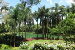 Inhotim Botanische Tuin Royalty-vrije Stock Fotografie