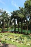 Inhotim botanisk trädgård Royaltyfri Foto