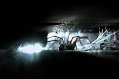 Inhysa spindeln (den Tegenaria atricaen) i panelljus Arkivbild