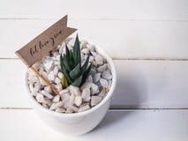 Inhysa växten i en keramisk kruka på en träbakgrund Arkivfoto