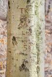 Iniciais e datas, cinzeladas em um tronco de árvore imagens de stock
