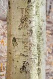 Iniciales y fechas, talladas en un tronco de árbol imagenes de archivo