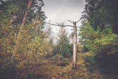 Inicio de sesión del árbol de Barenaked un bosque Foto de archivo libre de regalías