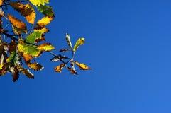Inicio del otoño Fotos de archivo