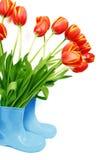 inicjuje świeżych tulipany fotografia stock